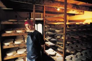 Veronica Steele, Milleens Cheese